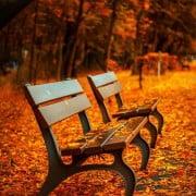 banco de madeira na rua no outono